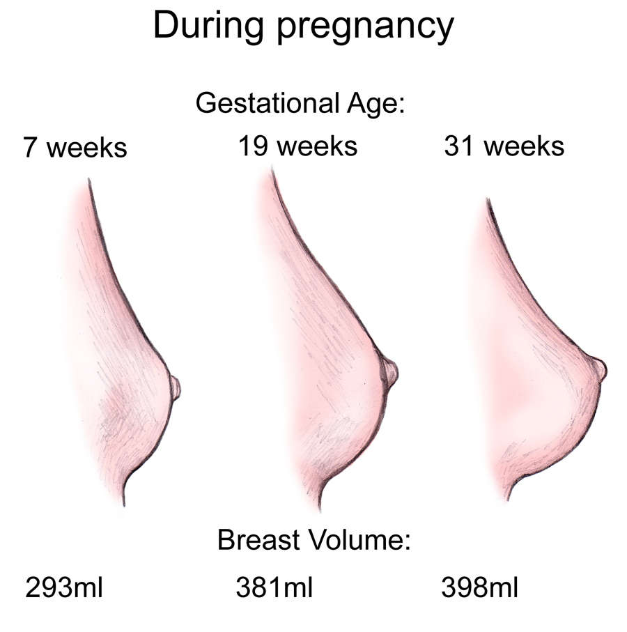 breast when Do pregnant hurt