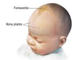 baby soft spot - new kids center, Sphenoid