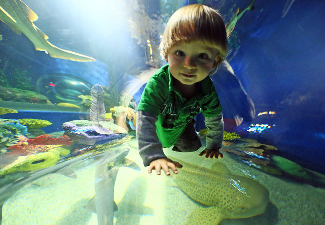 10 Best Aquariums In The Us New Kids Center