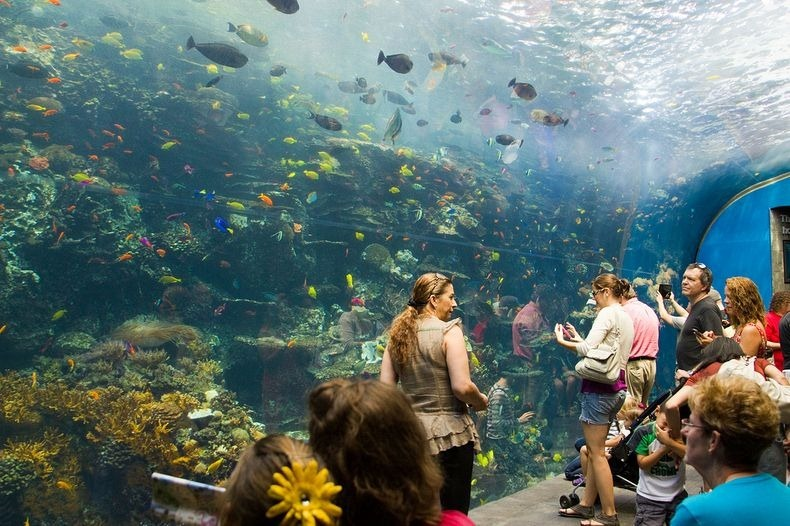 With More Than Nine Million Gallons Of Water Throughout The Complex This Is Largest Aquarium In World By Sheer Volume It Opened 2005 Which