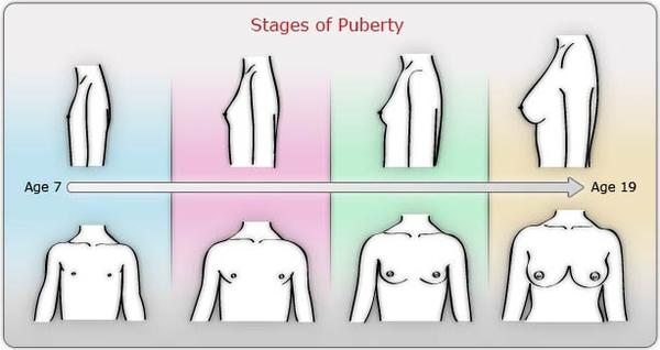 You tell Breast development chart think, you